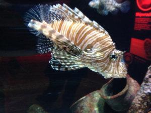 akvarie2