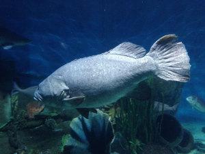 akvarie3